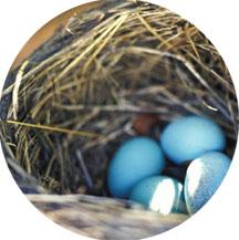 Nest © dailyfuss.com