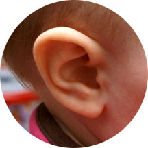 Ear © dailyfuss.com