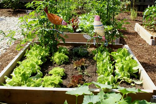Lettucebeds